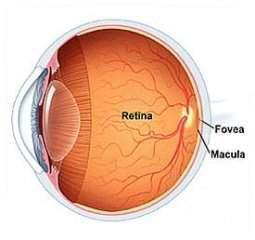 Retina._enfermedades